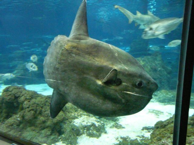L'Aquarium de Barcelona, Barcelona Hiszpania