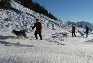 odwiedzenie rancza psów Husky, przejażdżka psim zaprzęgiem, fot. austria.info