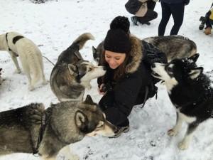 Huskyranch - spotkanie z26 psami husky wAustrii
