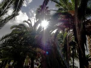 Słońce ipalmy wPuerto de la Cruz