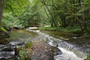 Pliszka - spływ kajakowy