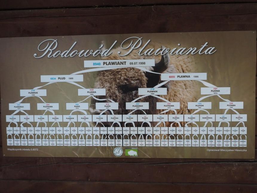 Rodowód Plawianta, Pszczyna