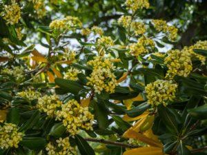 Kwiaty wogrodzie botanicznym wMaladze, Hiszpania