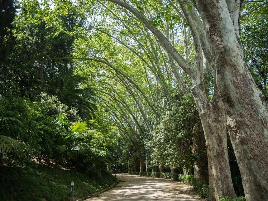 Ogród Botaniczny wMaladze, Hiszpania