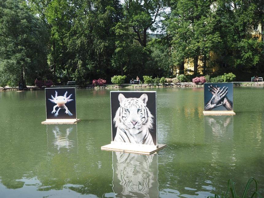 Baden bei Wien iniesamowity festiwal fotograficzny La Gacilly
