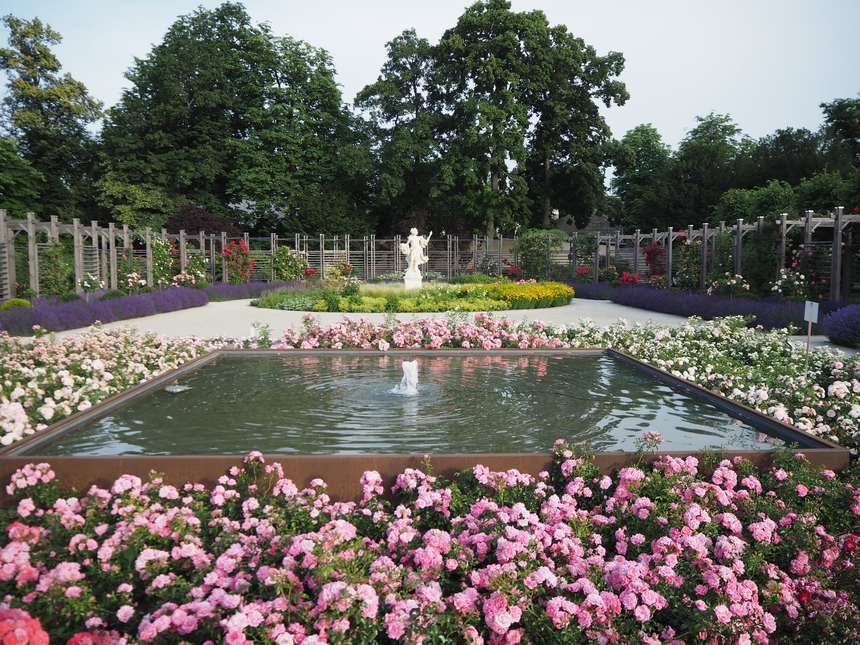 Ogród różany ikwitnące róże wBaden bei Wien, Austria