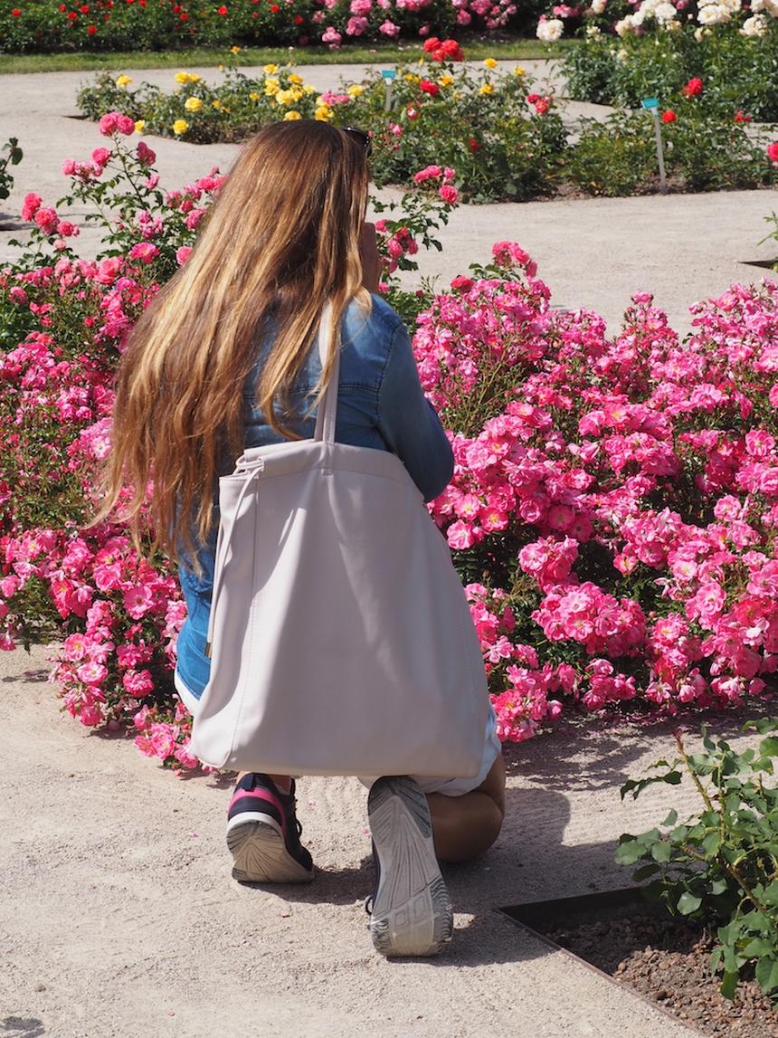 Róże iogród różany wBaden bei Wien, Austria