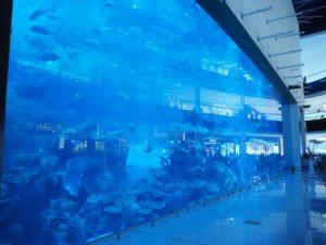 Dubai Aquarium - część, którą widać zDubai Mall