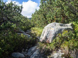 Ścieżka wzdłuż kosodrzewiny - ostatni odcinek zBystrej Ławki doSzczyrbskiego Jeziora