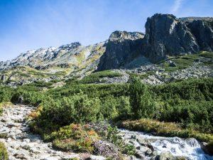 Szlak żółty kluczy wzdłuż potoku Młynica, Tatry Wysokie