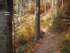 Szlak niebieski doschroniska PTTK naRysiance, Beskid Żywiecki