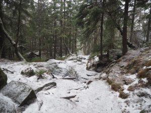 Szlakiem żółtym ze Szczelińca doPasterki