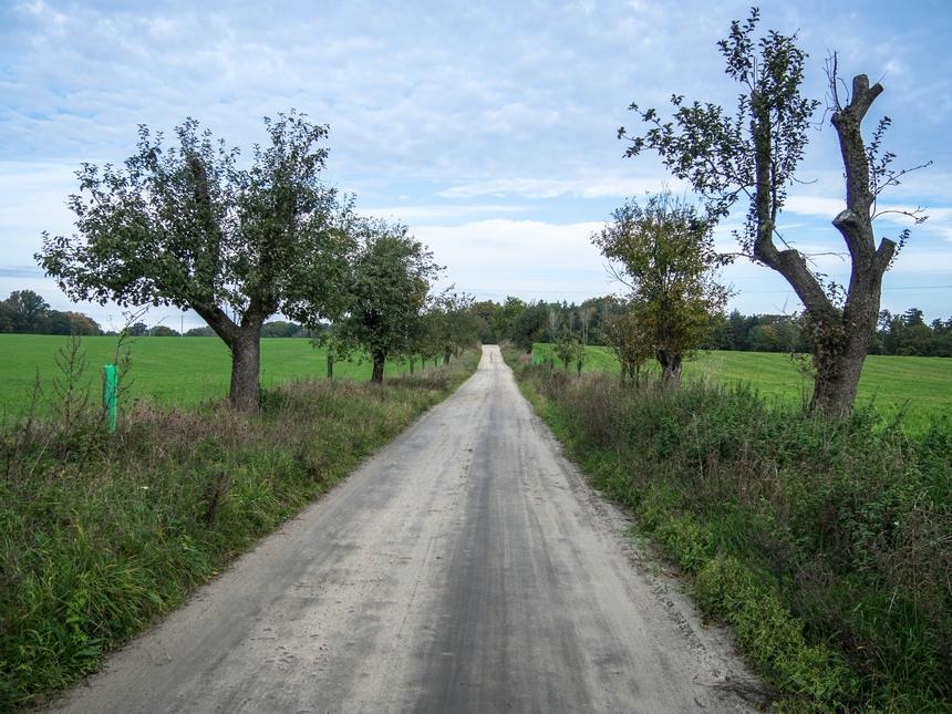 Ścieżka wzdłuż jabłoni wOśrodku Edukacji Przyrodniczej - tu swój początek ma ścieżka Jary kołoChalina