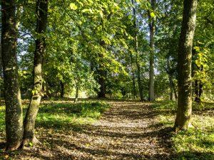 Park wChalinie, Ośrodek Edukacji Przyrodniczej