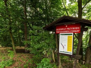 Rezerwat Buki nadJeziorem Lutomskim