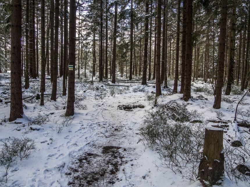 ...a czasami wśród gęstego lasu