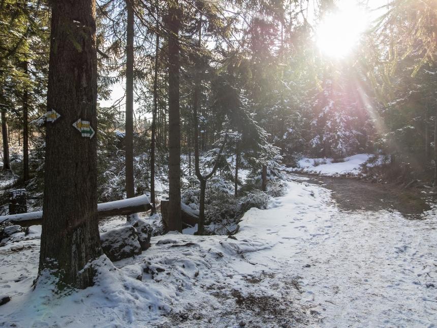 Rozdroże szlaku zielonego iżółtego - Góry Stołowe