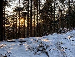 Szlakiem niebieskim wstronę Narożnika - Góry Stołowe